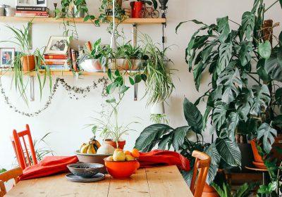 Pешение при высадке комнатных растений
